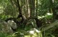 ctgm-ceciliaforest