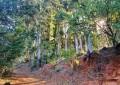 ctgm-newlandsforest