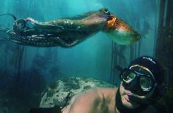 kelp_forest_My_Octopus_Teacher