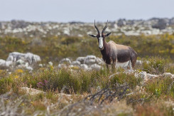 Cape_Point_copyright_arne_purves_able_Mountain_National_Park