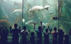 Two_oceans_aquarium_kelp_forest