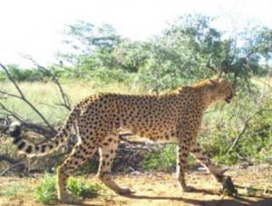 ctgm-cheetah-outreach