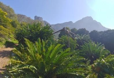 Kirstenbosch Visitor Information Centre