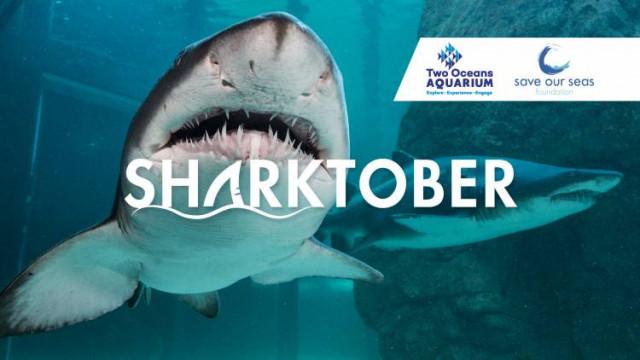 Sharktober at the Two Oceans Aquarium