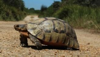 UWC: Cape Flats Nature Reserve