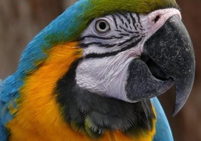 World of Birds Wildlife Sanctuary