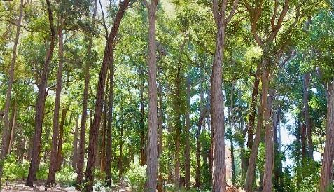 Tokai Forest and Arboretum