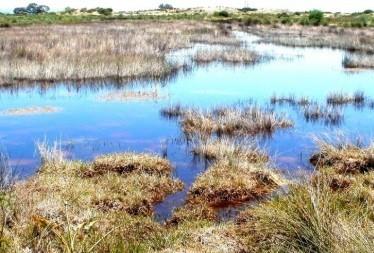 Driftsands Nature Reserve