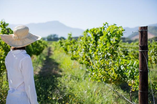 Best of Wine Tourism Winners - La Motte